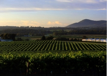 Vineyard_in_Springtime_looking_towards_Mt_Pleasant_and_Hunter_Valley_Scarp_Face