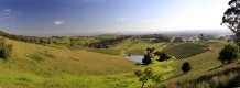 Vineyard_patchwork_above_Cessnock_Hunter_Valley_NSW_Australia