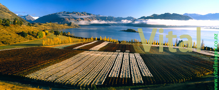 Photos Images Photography of Picturesque Central Otago Vineyards Wineries