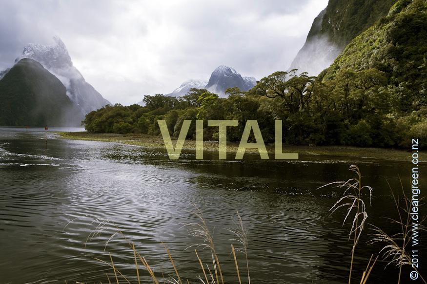 View from the Boat Harbour Milford Sound Fiordland