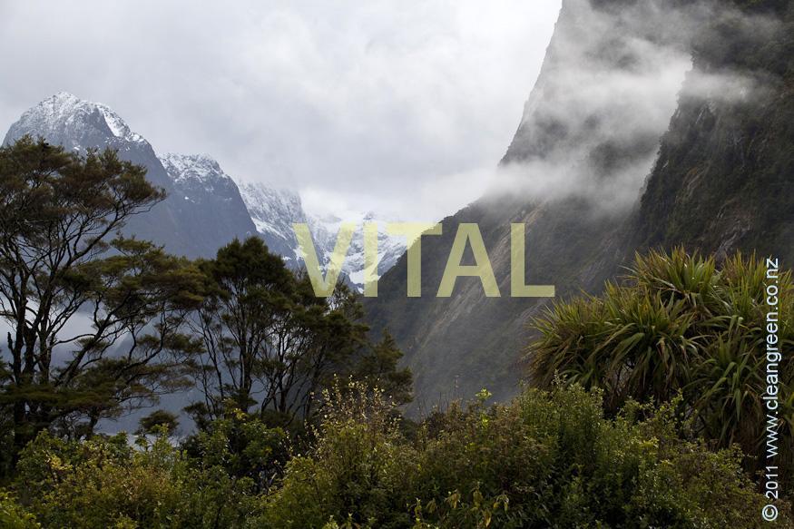 Biodiversity in NZ Rain Forest looking towards Harrison Valley & Mt Pembroke Milford Sound