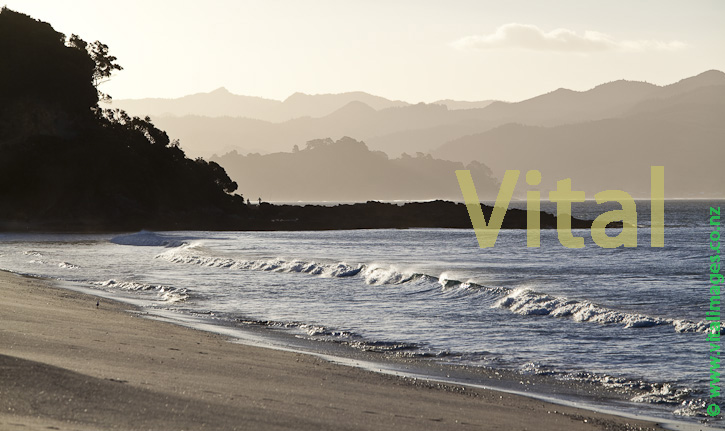 Waves and Salty Atmosphere on Headland near Rings beach Coromandel Peninsula