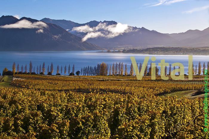 New Zealand NZ Vineyards Wine Pinot Noir