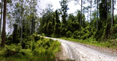 Photos_of_Eucalyptus_Forest_Interior_near_Barrington_Tops_National_Park_Chisester_Forest_Park_Hunter_Valley_NSW_Australia