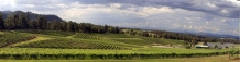 Vineyard_Image_Audrey_Wilkinson_Hunter_Valley_near_Pokolbin_NSW
