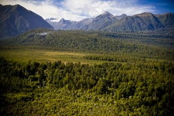 Podocarp_Forest_adjacent_to_the_NZ_Alpine_Fault_near_Jacobs_River_South_Westland